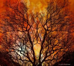 1010020139041the_burning_bush